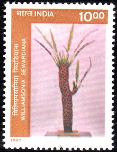 4. Williamsonia Sewardiana [Fossils]