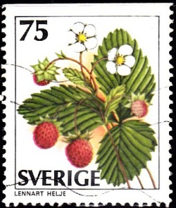1219 Alpine strawberry [Wild Berries]