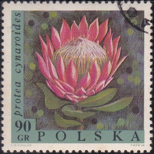 1582 Protea Cynaroides [Exotic Flowers]