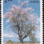 Indian Flowering Trees