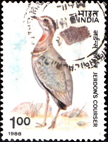 1164 Jerdon's Courser [India Stamp 1988]