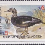 Birds of Bangladesh 1983