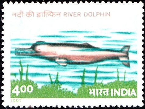 1269 River Dolphin [India Stamp 1991]