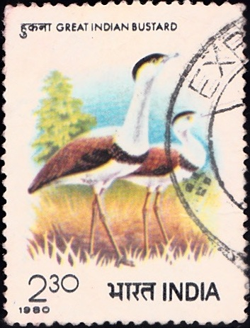 833 Great Indian Bustard [India Stamp 1980]