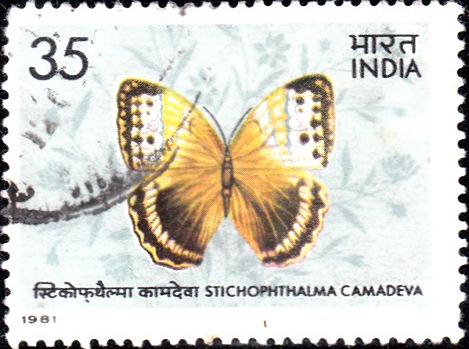 866 Indian Butterfly [India Stamp 1981]