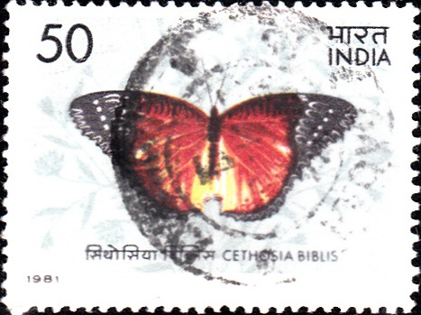 867 Indian Butterfly [India Stamp 1981]