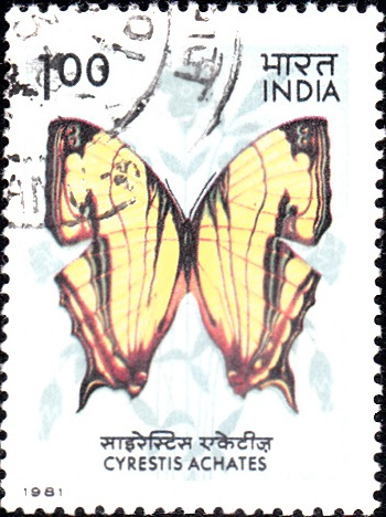 868 Indian Butterfly [India Stamp 1981]