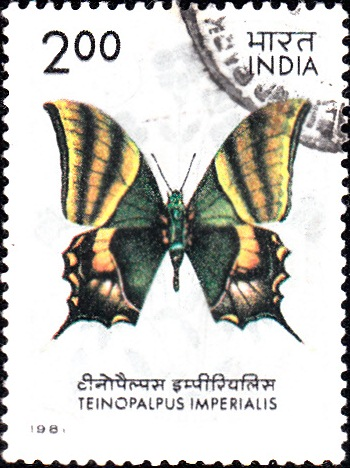 869 Indian Butterfly [India Stamp 1981]