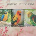Exotic Birds of India