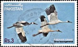 Pakistan Stamp 1983