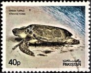 Pakistan Stamp 1981
