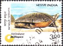 India stamp 2000, Endangered Species, Aquatic animal, reptile