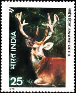 1. Swamp Deer [Indian Wildlife]