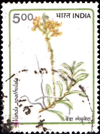 Golden Vanda