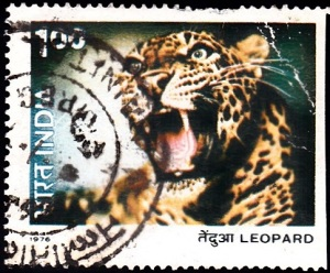 3. Leopard [Indian Wildlife]