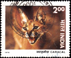 4. Caracal [Indian Wildlife]