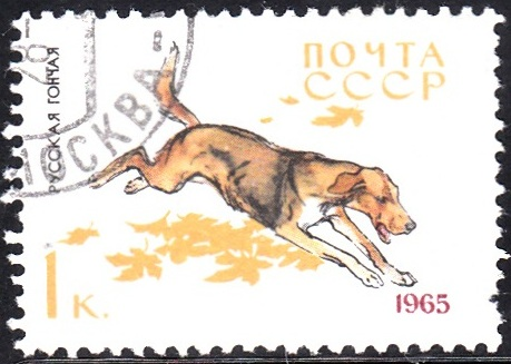 1. Russian Hound [Dog]