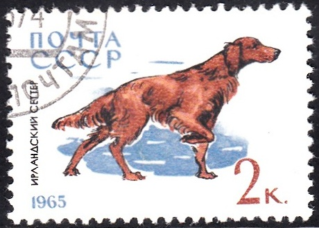 2. Irish Setter [Dog]