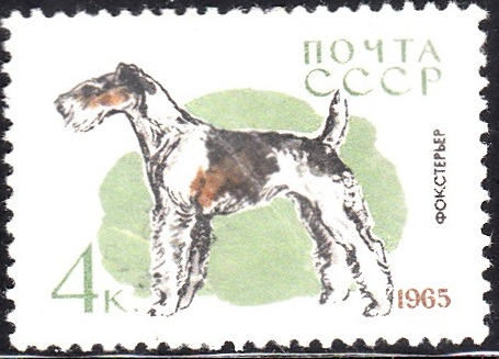 5. Fox Terrier [Dog]