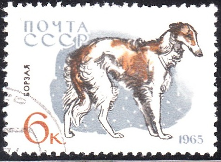 7. Borzoi [Dog]
