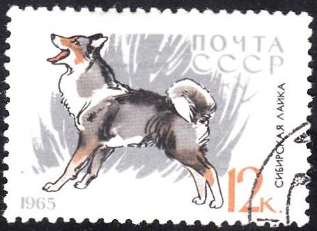 9. Husky [Dog]