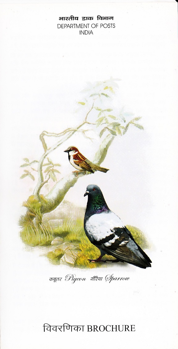 Domestic Pigeon and House Sparrow