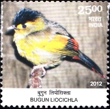 Liocichla bugunorum, Arunachal Pradesh