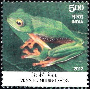 Malabar flying frog (Rhacophorus malabaricus), Western Ghats