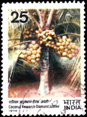 709 Coconut Research - Diamond Jubilee