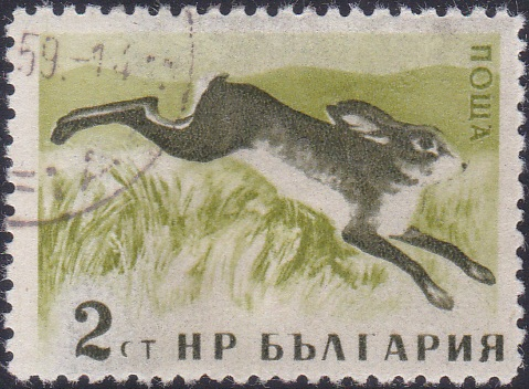 1004 Hare [Bulgaria Stamp]