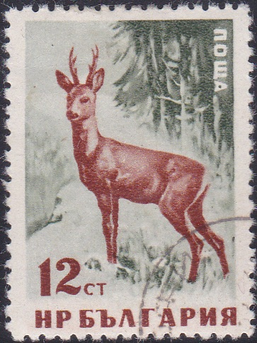 1005 Red Deer (Doe) [Bulgaria Stamp]