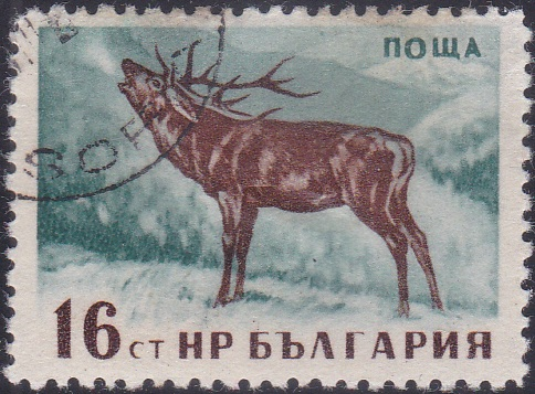 1006 Red Deer (Stag) [Bulgaria Stamp]