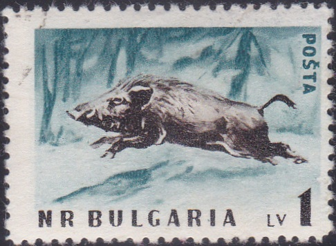 1009 Wild Boar [Bulgaria Stamp]