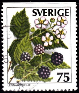 1215 Blackberry [Wild Berries]
