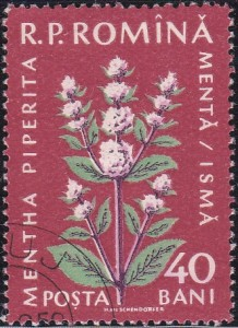 1299 Peppermint [Medicinal Flowers]