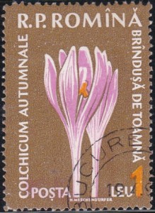 1302 Autumn crocus [Medicinal Flowers]