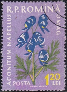 1303 Monkshood [Medicinal Flowers]