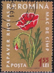 1304 Poppies [Medicinal Flowers]