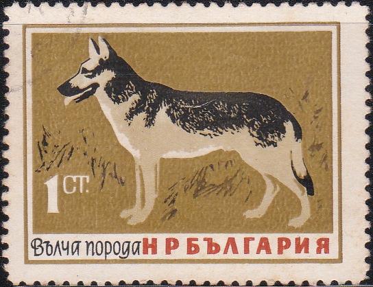 1348 German Shepherd [Dogs]