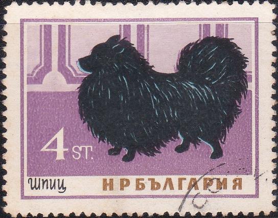 1351 Pomeranian [Dogs]