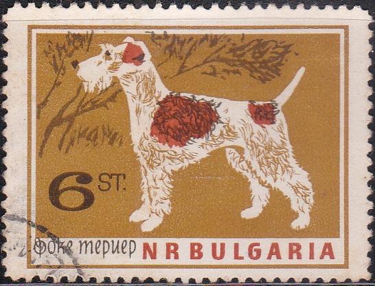 1353 Terrier [Dogs]