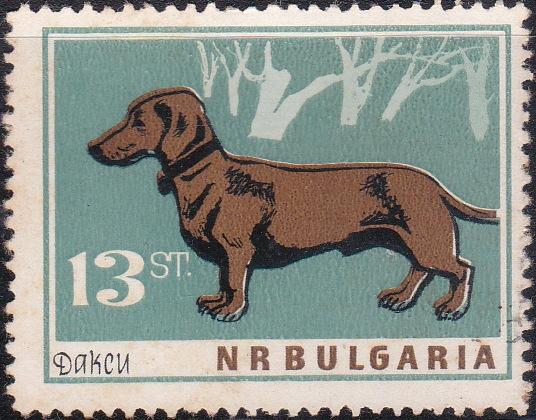 1355 Dachshund [Dogs]