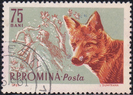1430 Red fox and feudal hunter [Romania Stamp]