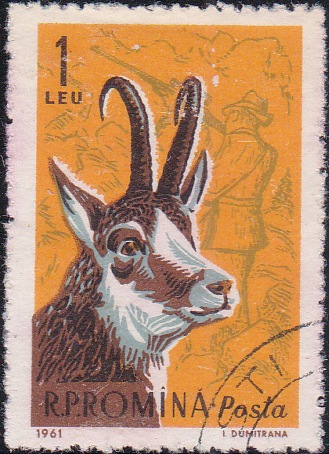 1431 Black goat and modern hunter [Romania Stamp]