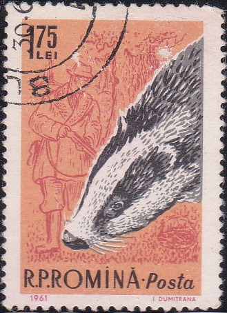 1433 Badger and hunter [Romania Stamp]