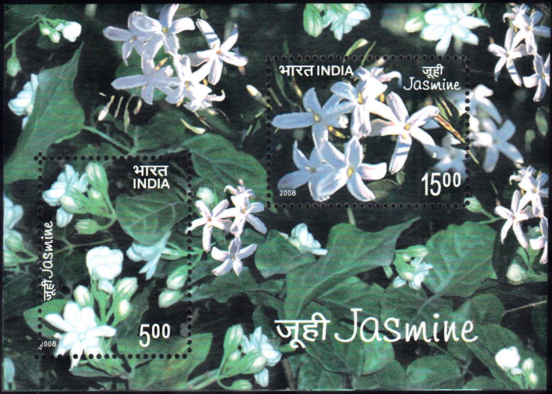 Indian Jasmine (Jasminum auriculatum)