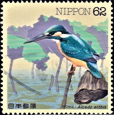 Eurasian Kingfisher (river kingfisher)