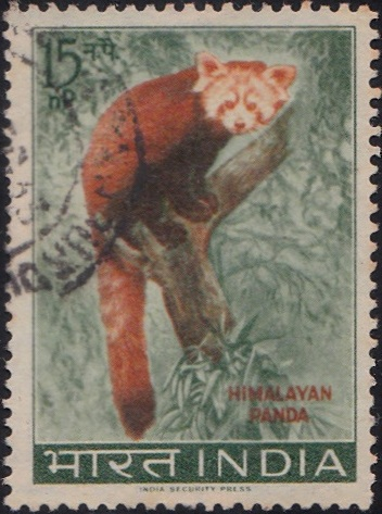 Himalayan Panda (Ailurus fulgens)