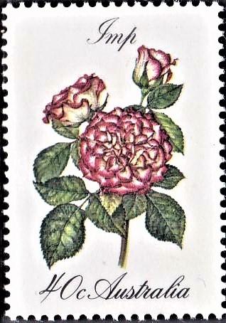 Australian Cluster Flowering Rose
