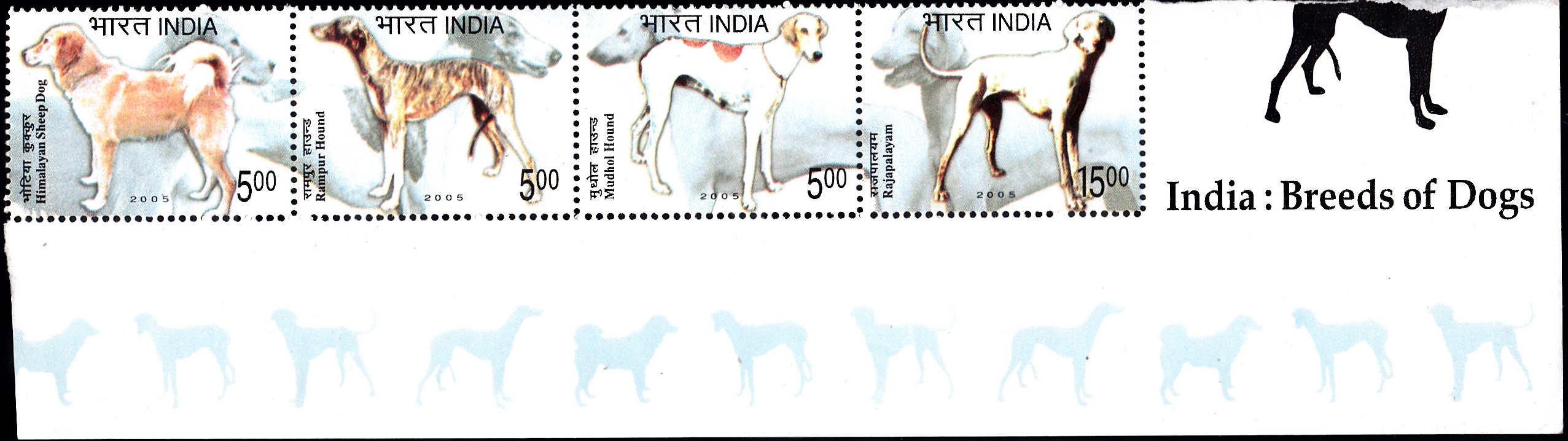 Gaddi kutta, Rampur greyhound, Caravan hound and Poligar hound